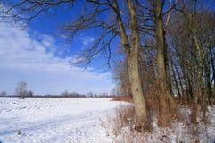 De winterlandschap in een platteland Stock Afbeeldingen