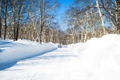 De winterlandschap een snow-covered boom op een achtergrond Royalty-vrije Stock Afbeeldingen