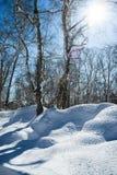 De winterlandschap een snow-covered boom op een blauwe hemel als achtergrond Royalty-vrije Stock Foto