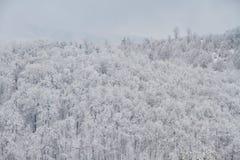 De winterlandschap in het bos Stock Afbeeldingen