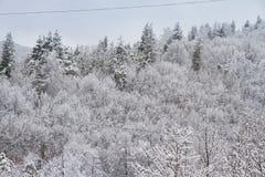 De winterlandschap in het bos Royalty-vrije Stock Afbeelding