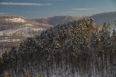 De winterlandschap in het bos Stock Foto