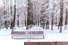 De winterlandschap in het stadspark op een bewolkte dag stock afbeeldingen