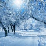 De winterlandschap, ijzige bomen Royalty-vrije Stock Foto's