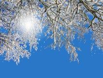 De winterlandschap, ijzige bomen Stock Fotografie