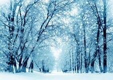 De winterlandschap, ijzige bomen in park Stock Foto's