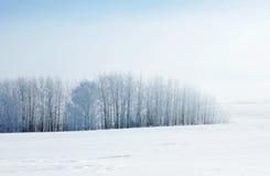 De winterlandschap in koude dag met bevroren bomen Stock Afbeelding