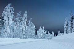 De winterlandschap - landelijke weg bij nacht met groot bomen behandeld Sn Stock Afbeeldingen