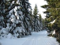 De winterlandschap langs de sporen voor langlaufski Stock Afbeelding
