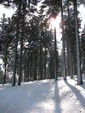 De winterlandschap langs de sporen voor langlaufski Royalty-vrije Stock Fotografie