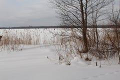 De winterlandschap, meer, vertrouwen, bomen stock fotografie