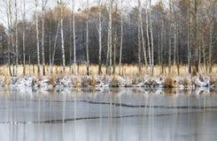 De winterlandschap met bevroren water en berkbomen Stock Foto's