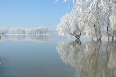 De winterlandschap met bezinning in het water Stock Afbeelding