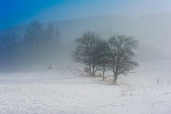 De winterlandschap met bomen en bergen tijdens een nevelig weer Stock Afbeeldingen