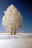 De winterlandschap met bomen en ijs stock foto's