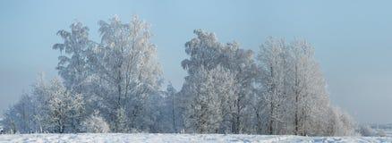 De winterlandschap met bomen met rijp worden behandeld die Stock Afbeeldingen