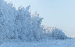 De winterlandschap met bomen met rijp worden behandeld die Royalty-vrije Stock Foto