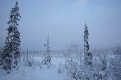 De winterlandschap met bomen in sneeuw stock foto's