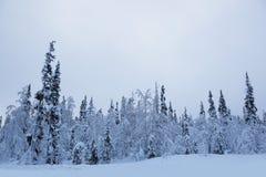 De winterlandschap met bomen in sneeuw royalty-vrije stock fotografie