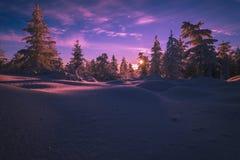De winterlandschap met bos, bewolkte hemel en zon en halo Stock Afbeeldingen