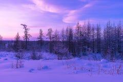 De winterlandschap met bos, bewolkte hemel en zon en halo Royalty-vrije Stock Afbeeldingen