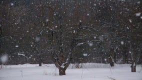 De winterlandschap met dalende sneeuw stock video