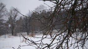 De winterlandschap met dalende sneeuw stock footage