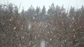 De winterlandschap met dalende sneeuw stock videobeelden