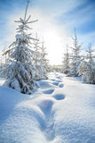 De winterlandschap met de bos en blauwe hemel Royalty-vrije Stock Fotografie