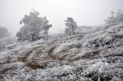 De winterlandschap met frost_2 Royalty-vrije Stock Foto