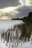 De winterlandschap met het sneeuw de wintergebied en de bevroren installaties bij zonsondergang Lang gras en riet door het bevror stock foto's