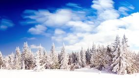De winterlandschap met hoge sparren en sneeuw in bergen stock footage