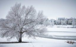 De winterlandschap met ijzige boom in buurtpark stock foto