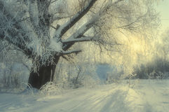 De winterlandschap met ijzige de winterboom in het zonsopganglicht - de scène van het de wintersprookjesland Stock Foto's