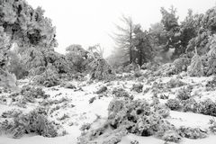 De winterlandschap met Kerstbomen royalty-vrije stock afbeeldingen