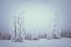 De winterlandschap met mist in de bergen Stock Afbeelding