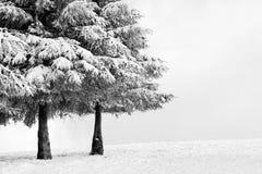 De winterlandschap met pijnbomen Stock Foto