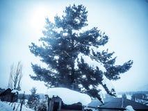 De winterlandschap met pijnboomboom Stock Fotografie