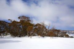 De winterlandschap met sneeuw Royalty-vrije Stock Fotografie