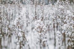 De winterlandschap met sneeuw behandelde installaties en bomen Kleine diepte van gebied voor het verbeteren van effect De scène v Royalty-vrije Stock Afbeeldingen