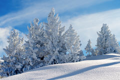 De winterlandschap met sneeuw behandelde pijnboombomen Royalty-vrije Stock Afbeeldingen