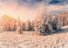 De winterlandschap met sneeuw in bergen de Karpaten, de Oekraïne vi Stock Fotografie