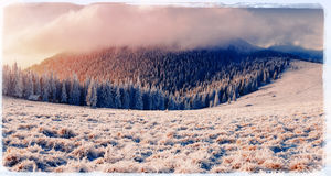 De winterlandschap met sneeuw in bergen de Karpaten, de Oekraïne vi Royalty-vrije Stock Foto