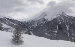 De winterlandschap met sneeuw en pijnboomboom Stock Afbeeldingen