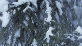 De winterlandschap met sneeuw langzaam en sparren die met sneeuw worden behandeld vallen die stock videobeelden
