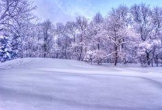 De winterlandschap met sneeuwbomen langs het de winterpark - de winter sneeuwscène in uitstekende tonen royalty-vrije stock fotografie