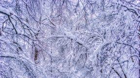 De winterlandschap met sneeuwbomen langs het de winterpark - de winter sneeuwscène in uitstekende tonen royalty-vrije stock foto