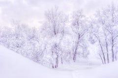 De winterlandschap met sneeuwbomen langs het de winterpark - de winter sneeuwscène in uitstekende tonen stock afbeelding