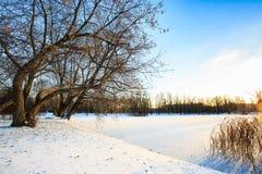 De winterlandschap met sneeuwgebied, leafless bomen en bevroren meer in stadspark Zonsondergang in het hout Royalty-vrije Stock Foto's