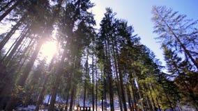 De winterlandschap met sparren en stroom op een zonnige dag stock footage